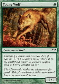 MTG Card: Young Wolf